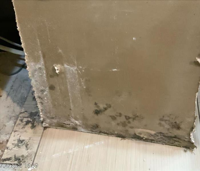 Mold growth on a wall.