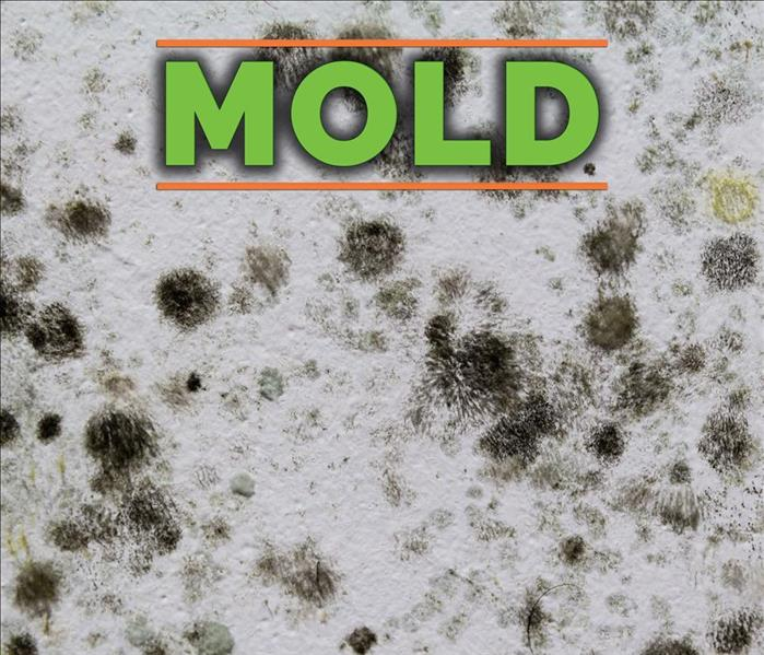 Mold Remediation 5 Common Types of House Mold