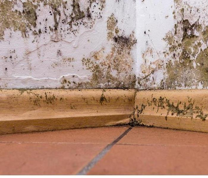 Commercial How To Keep Your Rental Properties Free From Mold